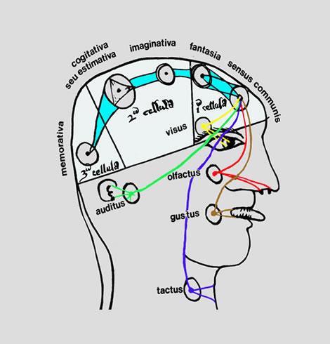 15 Hirnrinde, Cortex cerebri