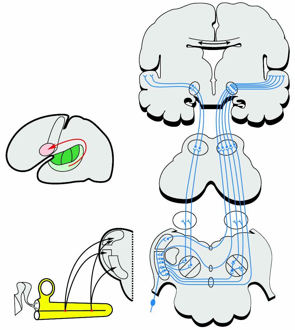 18 Hörsystem