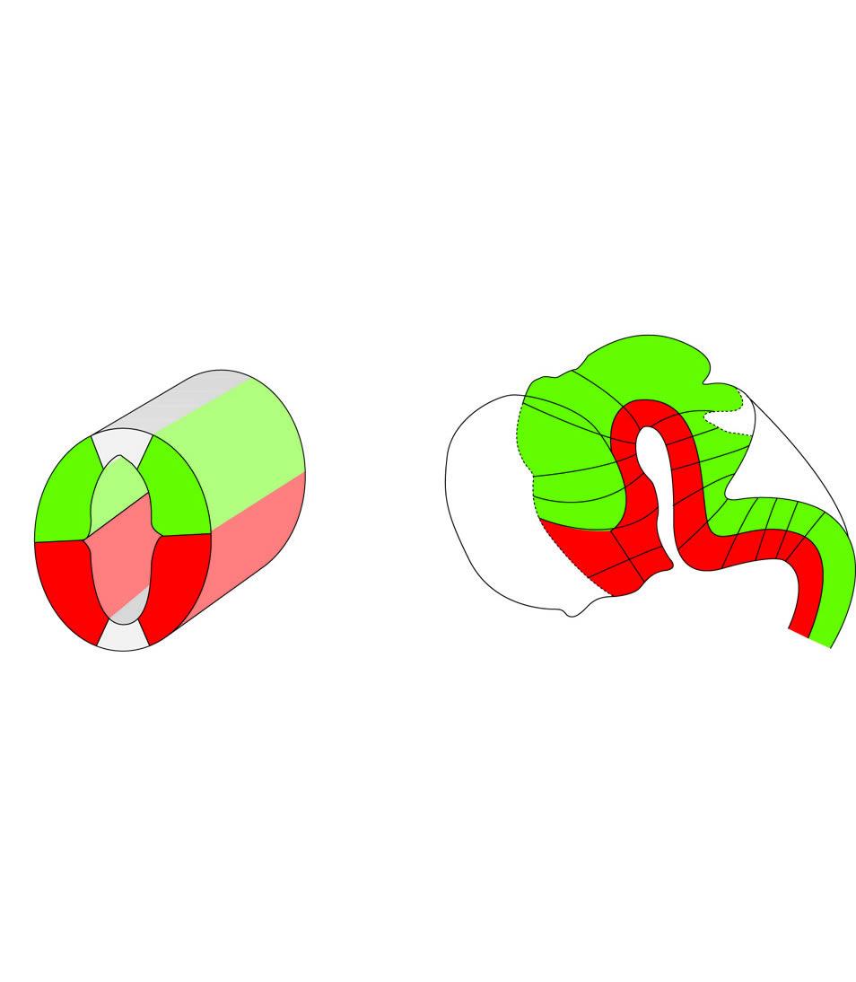 hirn physiologie querschnitt