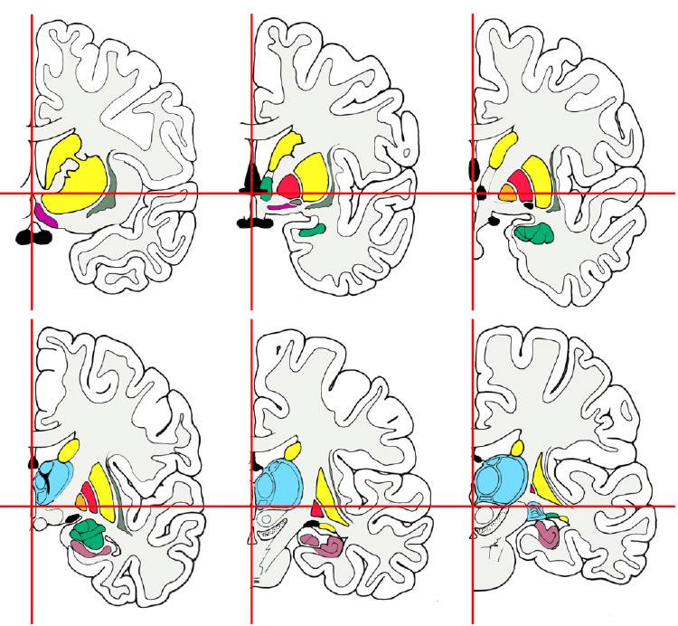 Großzügig Makroskopische Anatomie Des Nervensystemes Fotos ...