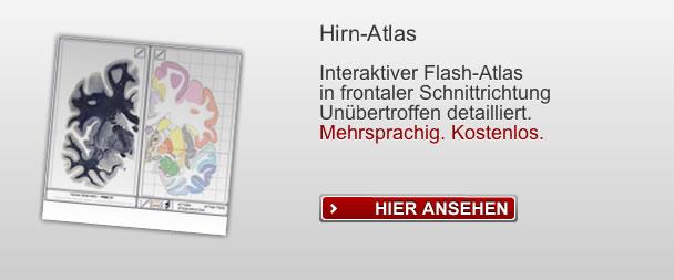 teaching.thehumanbrain.info - teaching human brain - lehrmaterialien ...