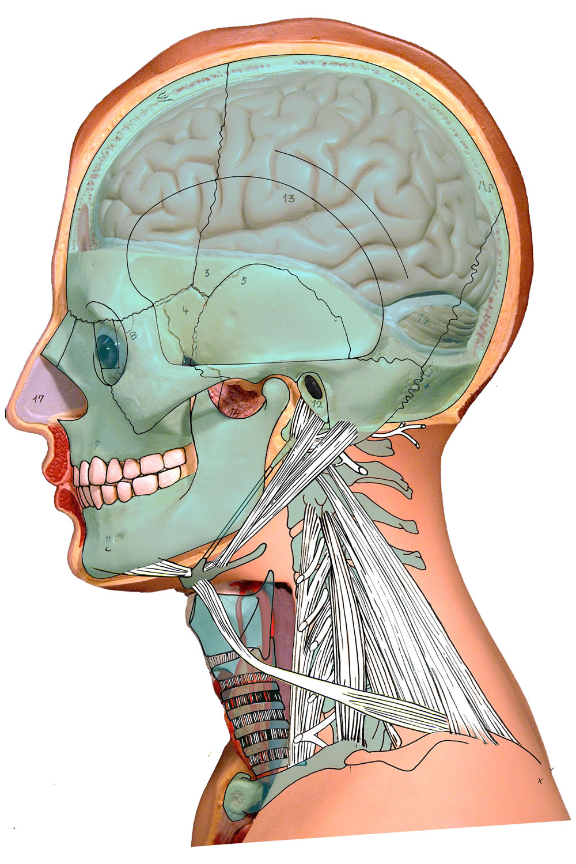 01 Oberflächliche Gesichts- und Halsregionen: Hautschnitte