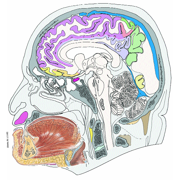 22 Kranio-zervikaler Übergang und Halswirbelsäule
